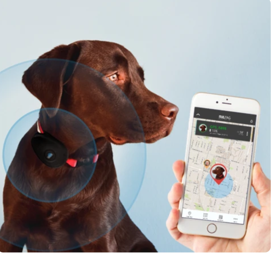 Dog GPS Tracker Australia
